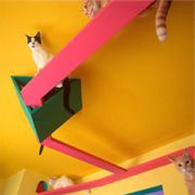 Cats' House!  Travel room-to-room on one hundred and forty feet of elevated highway with our feline family... as every cat lover knows -- Cats overhead are better than underfoot!