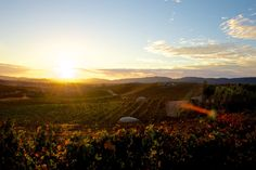 Atardecer en Valle de Guadalupe by Mario Alberto Chavez Cardenas on 500px - Sunset in the Guadalupe Valley