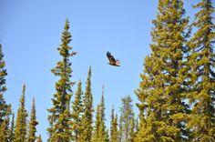 Deline Northwest Territories Canada