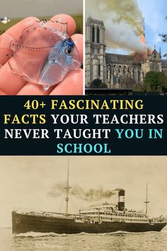 we are happy to present to you the most amazing and unusual facts that you were never taught in school (but you should have been). Prepare to have your hair blown back by this crazy amount of fascinating information! Funny Jockes, Ninja Funny, Crazy Funny Memes, Funny Facts, Funny Laugh, You Funny, Laughing Jokes, People Laughing, Dark Humor Jokes