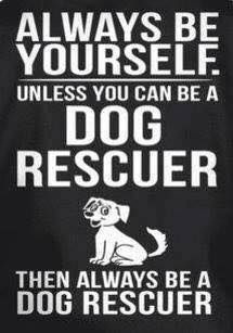 Be a dog rescuer!