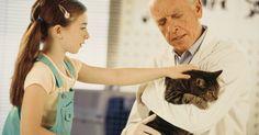 Como tratar feridas de gato com Neosporin. Pequenos machucados em gatos podem ser tratados em casa com produtos de primeiros socorros básicos, como sabão, água oxigenada e Neosporin, um creme antibiótico. Esses produtos ajudam a prevenir infecções e aceleram o processo de cicatrização. Trate apenas feridas superficiais, como arranhões ou pequenos cortes com Neosporin. Se as feridas forem ...