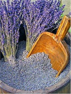 Drying Lavender: How to Dry Lavender Flowers at Home Wie Lavendel zu Hause trocknen