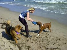 Celebrity Dog Lovers - Chelsea Handler with her dogs Chuck & Gary.