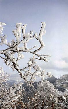 Paysage neige #2 France