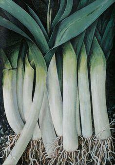 untitled leeks no.1 Binder, Vegetables, Collection, Trapper Keeper, Vegetable Recipes, Teacher Binder, Financial Binder, Veggies