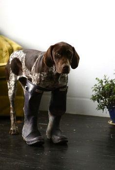 :-). Looks like my parents dog Madeira