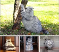 overweight Fat Cat - We've put together our favourite funny animal pictures for you to enjoy! From pigs in shades to smiling dogs check out the weird and wonderful world of the animal kingdom. Fat Animals, Funny Animals, Fat Cats, Cats And Kittens, Kitty Cats, Smiling Dogs, Grey Cats, Funny Animal Pictures, Funny Cute