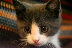 Kittens - how adorable are these cats?