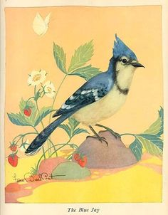 1940's Blue Jay Illustration