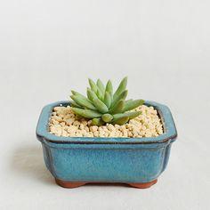 Cyan Ceramic Succulent Planter-Glazed Porcelain Pot by MarukoCoco