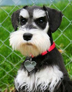 5 Most Kid Friendly Dog Breeds Que carinha mais seria!