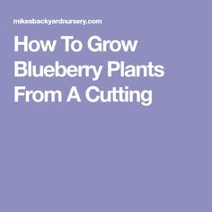How To Grow Blueberry Plants From A Cutting