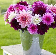 Enter the giveaway for Longfield Gardens Rose Dinner Plate Mix Dahlia bulbs at Busy-at-Home!