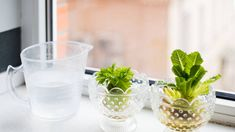 I Quit Sugar - An endless supply of celery? Here's 4 ways to regrow your veggies Regrow Vegetables, Root Vegetables, Veggies, Growing Vegetables, Cooking Onions, Turnip Greens, Old Farmers Almanac, Plant Diseases, Cottage Style Decor