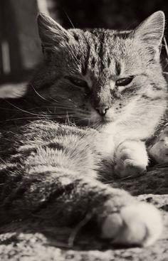 #Caturday(10)