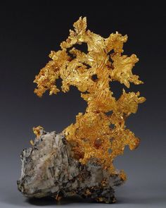 Gold Mineral Location: Eagle's Nest Mine, Placer Co., California, USA Size: 9 x x cm. Minerals And Gemstones, Rocks And Minerals, Gold Prospecting, Beautiful Rocks, Mineral Stone, Rocks And Gems, Mellow Yellow, Stones And Crystals, Gem Stones