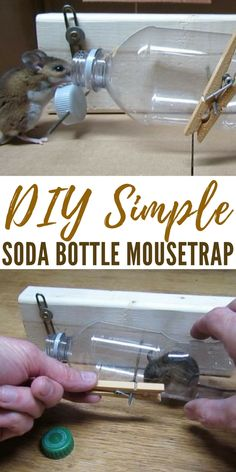 DIY Simple Soda Bottle Mousetrap - This DIY mouse trap gives you some options when the mice start coming and carrying disease along with them. This is a simple trap that can be made with your trash! That makes it an even more interesting model. Mouse Trap Diy, Mouse Trap Game, Best Mouse Trap, Soda Bottles, Plastic Bottles, Soda Bottle Crafts, Diy Simple, Easy Diy, Sodas