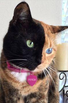 O Gato Preto que amo e o Gato Amarelo que amo também.. dois em um                                                                                                                                                                                 Mais