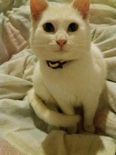 My cat :D