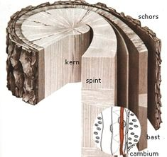"""Van boom tot beeld, Cursus """"Beeldhouwen in hout"""" aan De Gruitpoort Doetinchem; Werkwijze"""