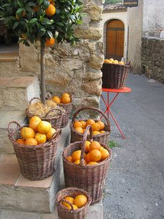 Oranges on the streets in Provence