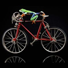 Bicycle Art  Frog Riding Bike  Cycling Print  Live Frog by FrogFun, $150.00                                                 there