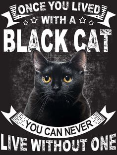 Una vez que viviste con un gato negro - Cats - I Love Cats, Crazy Cats, Cool Cats, Black Cat Quotes, Black Cat Memes, Memes Arte, Black Cat Art, Black Kitty, All Black Cat