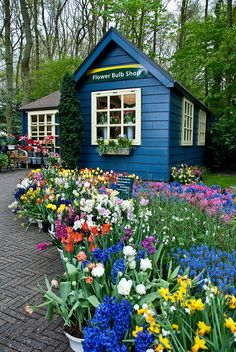 Flower Shop in Keukenhof Gardens. Adorable! I'd love to stroll around here in my Hama Wedges. #FlowerShop #Anthropologie