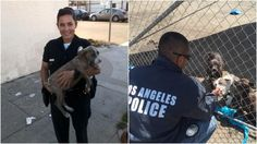 Meet the LAPD Officers who won't rest until every dog is safe.  These Dedicated Officers Are The Frontline In The Fight Against Animal Homelessness – AngusPost