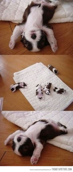 Just thought I'd cheer up your Monday with Puppies! First edition sleeping puppies. Cuddle puppies: My Baby! Cute Baby Animals, Animals And Pets, Funny Animals, Wild Animals, I Love Dogs, Puppy Love, Cutest Puppy, Cute Puppies, Cute Dogs