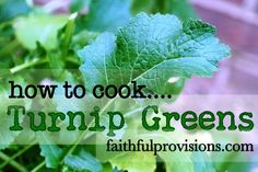 How to Cook Turnip Greens  I can't believe I'm cooking turnips at the age of 65...grew up in the north....been in NW Florida for about 35 years...my hubby will love this!!  Yummy with homemade cornbread, I'm sure.....