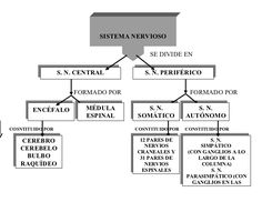 Mapa conceptual del sistema nervioso Central y Periférico: Cuadros sinópticos | Cuadro Comparativo