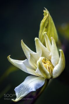 flower garden by paintbrezno #nature #photooftheday #amazing #picoftheday