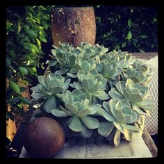 Well-Cultivated: succulents.