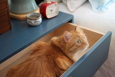 Ziggy, A New Non-Toxic Furniture Line | Rue