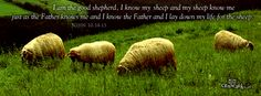 I am the good shepherd, I know my sheep and my sheep know me just as the Father knows me and I know the Father and I lay down my life for the sheep.  John 10:14-15