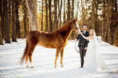 Beautiful winter wedding with horse and bride and groom