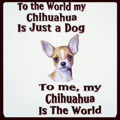 Truth My Chihuahua oreo is my world she is my fur baby