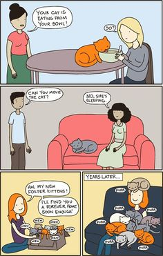 40+ Hilarious Comics That Reveal The Reality Of Living With Cats | Bored Panda | Bloglovin'