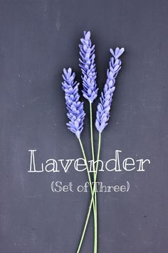 Felt Lavender Set of Three. Build Your Own Bouquet.