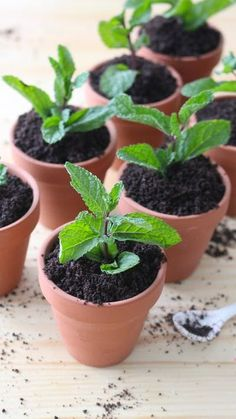 Recipe with video instructions: This potted plant may seem normal, but it actually packs a chocolatey surprise treat. Ingredients: 3/4 cup sugar, 1/2 cup cocoa powder, 1/4 cup corn starch, 3 cups...