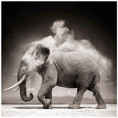 Africabooks-1 - Nick Brandt - Only 400,000 or so elephants in the wild in the year 2000. From 5 - 10 million in 1900. Shameful.