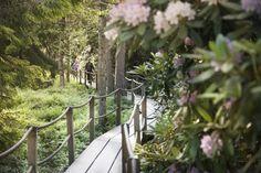 Haagan Alppiruusupuisto, rodopuisto Helsinki, Photoshoot Ideas, Garden Bridge, Finland, Outdoor Structures, Places, Nature, Naturaleza, Photography Ideas