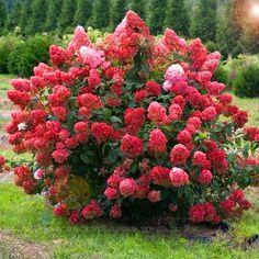 Hydrangea, Home And Garden, Green, Plants, Audi A6, Animals, Decor, Gardens, Rose Trees