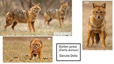 Danube Delta, Animals, Africa, Animales, Animaux, Animal, Animais
