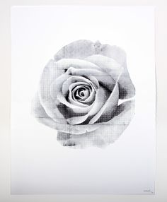 Stunning rose printed with black water based ink  Printed on 245 gsm paper stock  Size: 760mm x 560mm  100 prints have been printed   Shipped in a large tube