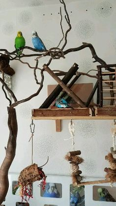 Budgies playing, The bird cage is equally a house for your birds and an ornamental tool. You are able to choose anything you need among the bird cage versions and get a lot more specific images. Homemade Bird Toys, Diy Bird Toys, Diy Budgie Toys, Diy Bird Cage, Bird Cages, Funny Parrots, Rabbit Cages, Bird Aviary, Budgies