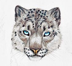 Snow Leopard Drawings | snow leopard by singapuracat traditional art drawings animals 2013 ...