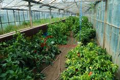 EXCLUSIV: Buzaul face banca de gene in sistem public-privat Plants, Life, Planters, Plant, Planting